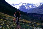 Mountain biker with wildflowers