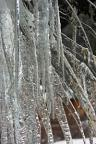 Winter icicles create hypnotic patterns