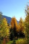Blue skies and fall colors in Crested Butte