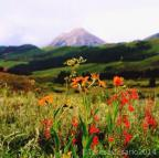 Beautiful photography from Teresa Cesario! Crested Butte wild flowers are a sight to be seen!