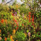 Thanks for the spectacular Crested Butte wildflower show this summer!<br>Photographer: Teresa Cesario
